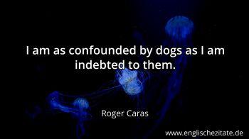 Hunde Dogs Zitate Auf Englisch Englischezitatede